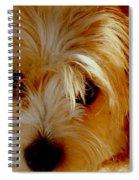 Adorable Daisy Spiral Notebook
