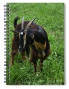 Adorable Goat In A Field With Thick Green Grass Spiral Notebook