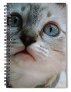 Adorable Kitty  Spiral Notebook