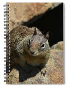 Adorable Up Close Look Into The Face Of A Squirrel Spiral Notebook