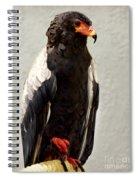African Eagle-bateleur II Spiral Notebook