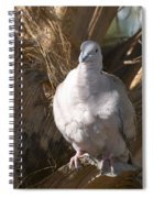 African Collared Dove 3 Spiral Notebook