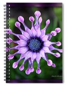 African Daisy - Hdr Spiral Notebook