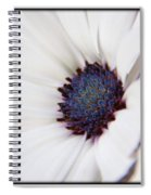 African Daisy  Sky And Ice Spiral Notebook