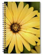 African Daisy-twice Spiral Notebook