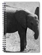 African Elephant Calf Spiral Notebook