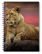 African Female Lion In The Grass At Sunset Spiral Notebook