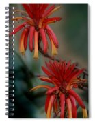 African Fire Lily Spiral Notebook