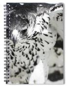African Hawk Eagle 2 Spiral Notebook