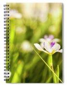 African Iris Bokeh Spiral Notebook