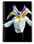 African Iris Raindrops Spiral Notebook