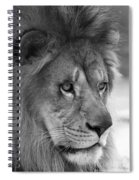 African Lion #8 Black And White Spiral Notebook