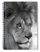 African Lion #8 Black And White  T O C Spiral Notebook