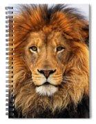African Lion 1 Spiral Notebook