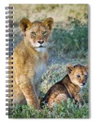 African Lion Panthera Leo Family Spiral Notebook