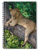 African Lion Panthera Leo On Tree, Lake Spiral Notebook