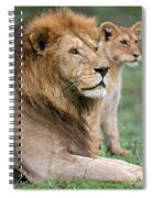 African Lion Panthera Leo With Its Cub Spiral Notebook
