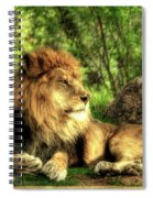 African Lion  Spiral Notebook