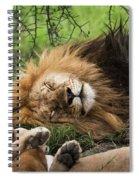 African Lion Sleeping In Serengeti Spiral Notebook
