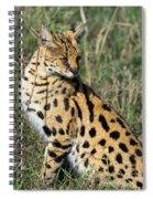 African Serval In Ngorongoro Conservation Area Spiral Notebook
