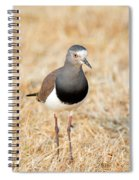 African Wattled Lapwing Vanellus Spiral Notebook