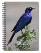 African White Eye Starling Spiral Notebook