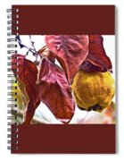 After Rain - Fall In Mendocino Orchard Spiral Notebook