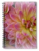 After The Rain - Dahlias Spiral Notebook