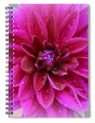 After The Rain - Purple Dahlia Spiral Notebook