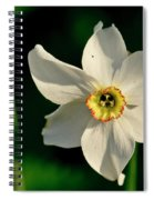 Afternoon Of Narcissus Poeticus. Spiral Notebook
