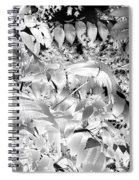Afternoon Sunlight With Stars Spiral Notebook