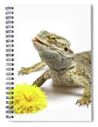 Agama And Dandelion  Spiral Notebook