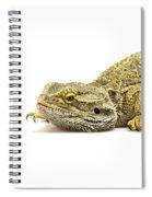Agama Lizard  Spiral Notebook