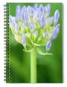 Agapanthus Africanus Flower Spiral Notebook