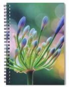 Agapanthus Dawn Spiral Notebook