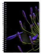 Agapanthus In The Shadows Spiral Notebook
