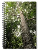 Agathis Borneensis Tree Spiral Notebook