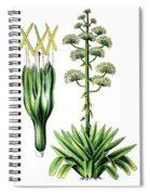 Agave Americana, Common Names Century Plant, Maguey Or American  Spiral Notebook