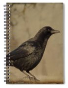 Age Old Crow  Spiral Notebook