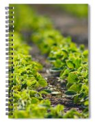 Agriculture- Soybeans 1 Spiral Notebook