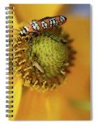 Ailanthus Webworm Moth #5 Spiral Notebook