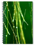 Air Roots Orchid Spiral Notebook