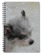 Airport Pup Spiral Notebook
