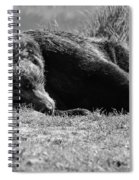 Alaska Grizzly - Do Not Disturb Grayscale Spiral Notebook