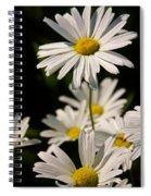 Alaskan Shasta Daisy Spiral Notebook