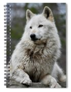 Alawa The Wolf Rests Spiral Notebook