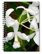 Alba  Orchid Spiral Notebook