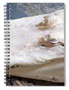 Albino Alligator Spiral Notebook