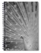 Albino Peacock In Black And White Spiral Notebook