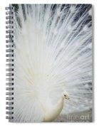 Albino Peacock Spiral Notebook